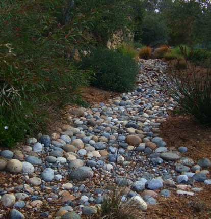 a dry creek bed complete with australian natives this is almost no maintenance gardening. Black Bedroom Furniture Sets. Home Design Ideas